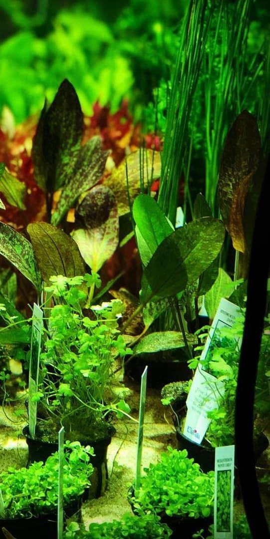 aquarium depot for all your aquatic and reptile needs
